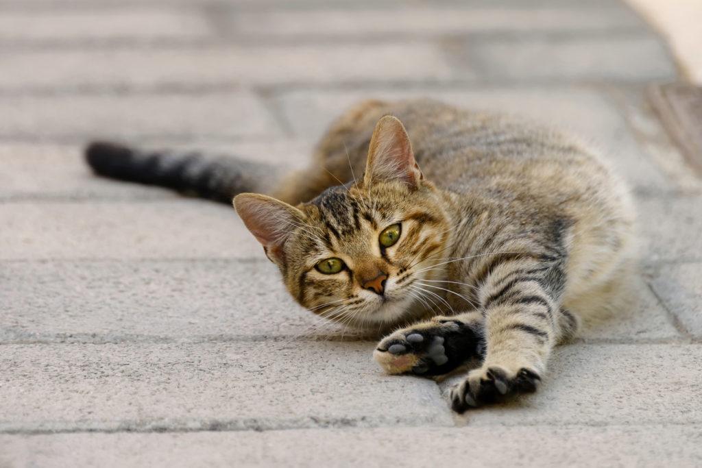 A macska hasnyálmirigy felbomlott - Életmód