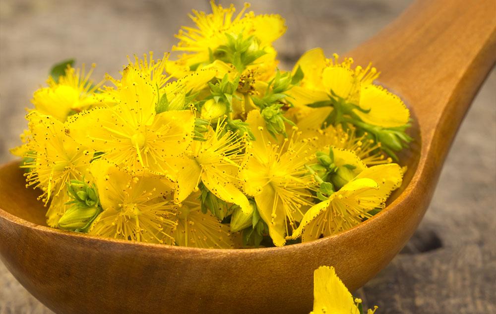 gyógynövények, amelyek segítik a zsírvesztést