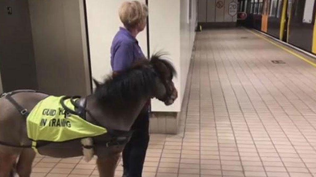My Little Pony: franchise és játékok. Mint népszerűjátékok a pónikról?