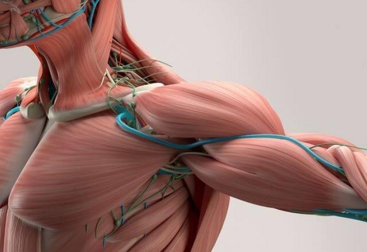 testtípusok zsírvesztésre