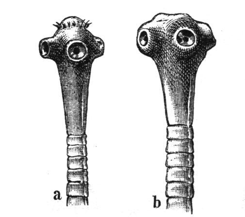 galandféreg fogyás előtt és után