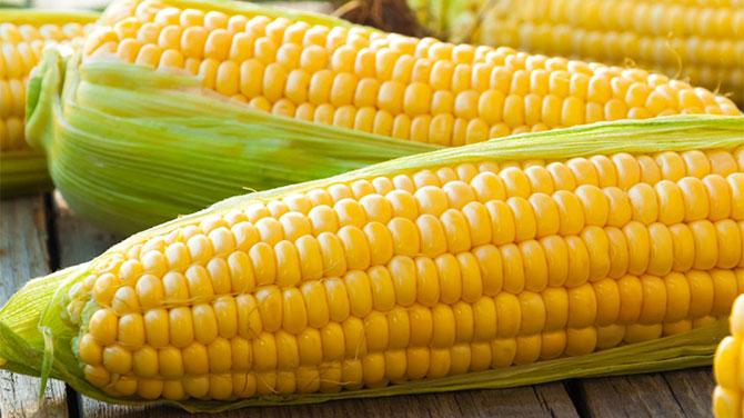 Főtt kukorica és a fogyás