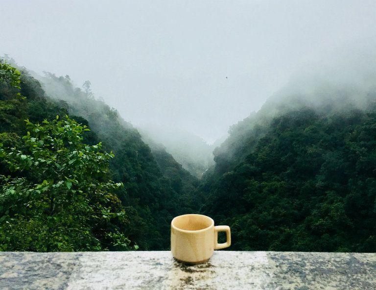 a forró tea segíthet-e a fogyásban