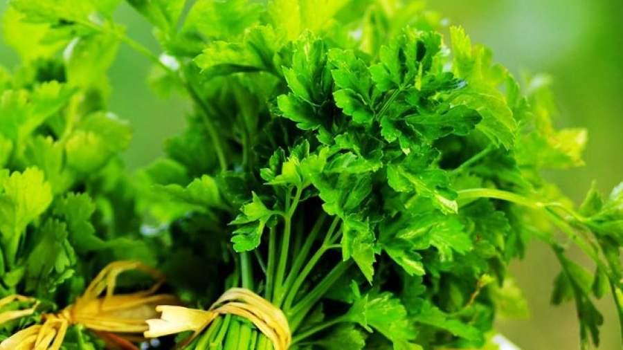 Petrezselyem tea a fogyáshoz józ - A zöld tea előnyei, hogy gyorsan lefogy