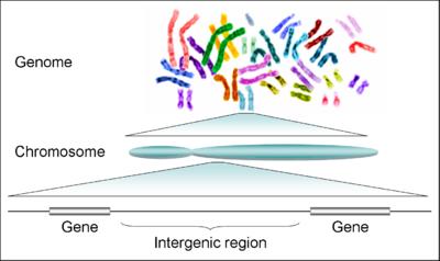 DNS fogyni