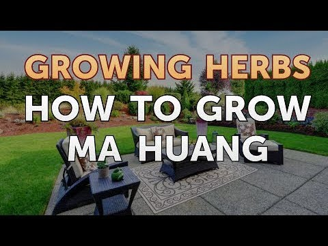 Ma huang zsírégetés