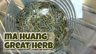ma huang tea fogyás)