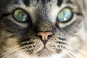 okozhat-e macska asztma súlycsökkenést)