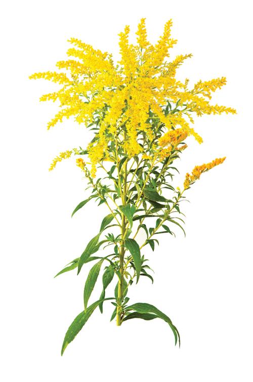 minden természetes gyógynövény a fogyáshoz)