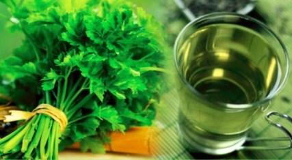 petrezselyem tea fogyás előnyei)
