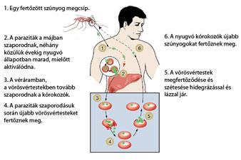 hiv tünetek fogyás