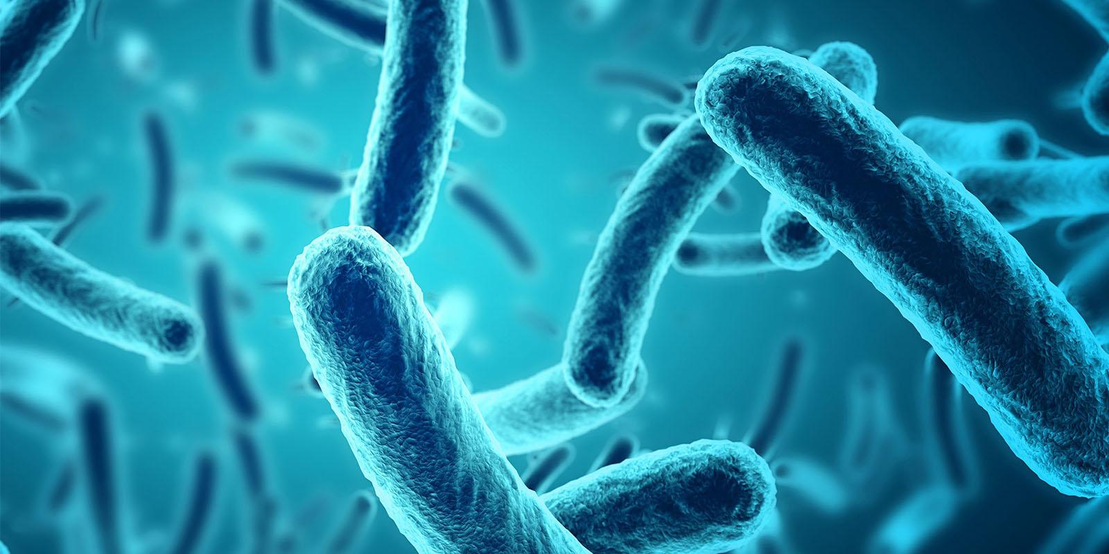 az e-coli okoz-e fogyást